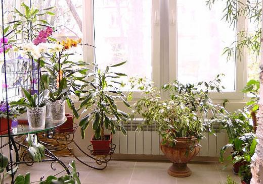 Как красиво расположить цветы в квартире и подоконниках